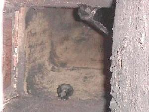 chimney swifts in the chimney